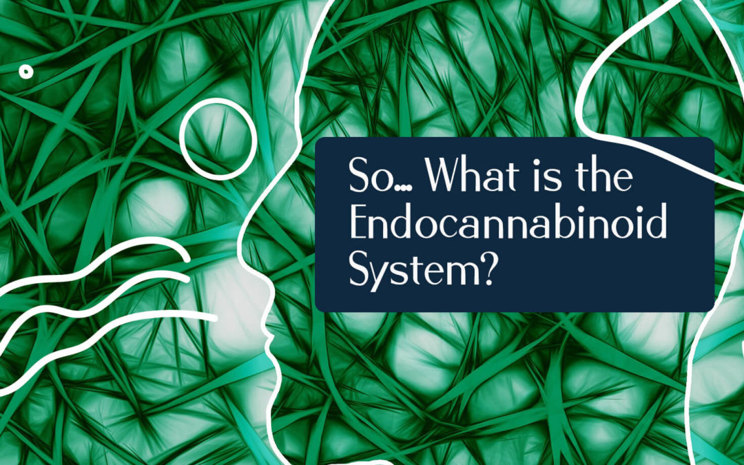 So… What is the Endocannabinoid System?